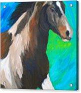 Painted Pony Acrylic Print