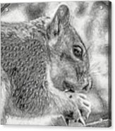 Painted Squirrel Acrylic Print
