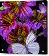 Painted Tongue With White Butterfly Acrylic Print
