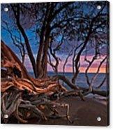 Painted Tree Acrylic Print