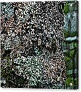 Painted Treebark Woodcut Acrylic Print