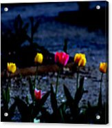 Painted Tulips Acrylic Print