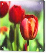 Painted Tulips Acrylic Print