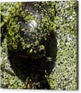 Painted Turtle Camouflague Acrylic Print