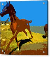 Painted War Horses Acrylic Print