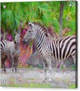 Painted Zebra Acrylic Print