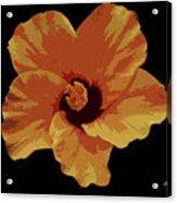 Painter Hibiscus Acrylic Print