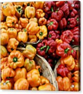 Painterly Peppers Acrylic Print