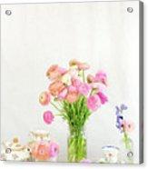 Painterly Ranunculus Tea Time Acrylic Print