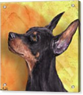 Painting Of A Cute Doberman Pinscher On Orange Background Acrylic Print
