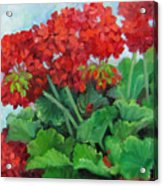 Painting Of Red Geraniums Acrylic Print