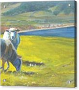 Painting Of Sheep On A Cliff Top Acrylic Print