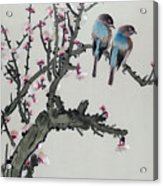 Pair Of Birds On A Cherry Branch Acrylic Print