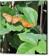 Pair Of Butterflies Acrylic Print