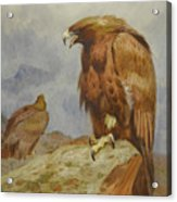 Pair Of Golden Eagles By Thorburn Acrylic Print