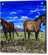 Pair Of Horses Painting Acrylic Print