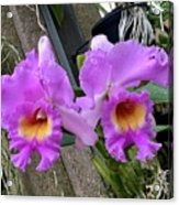 Pretty Purple Orchids Acrylic Print