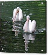 Pair Of Pelicans Acrylic Print