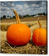Pair Of Perfect Pumpkins Acrylic Print