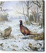 Pair Of Pheasants With A Wren Acrylic Print by Carl Donner