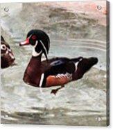 Pair Of Wood Ducks Acrylic Print