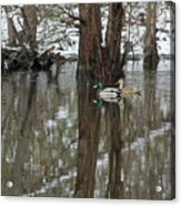 Paired Up - Awaiting Spring Acrylic Print