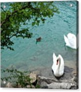 Pairs Of A Feather Acrylic Print