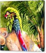 Pajaro Acrylic Print