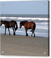 Palamino Ponies on the Beach Acrylic Print