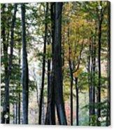 Palatine Forest Acrylic Print