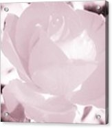 Pale Pink And White Rose Acrylic Print