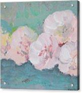 Pale Pink Peonies Acrylic Print