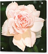 Pale Pink Rose Acrylic Print