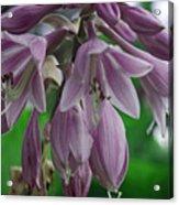 Pale Purple Starbursts Acrylic Print