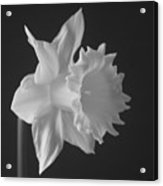 Pale Remarks Acrylic Print
