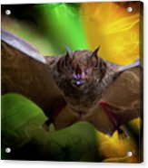 Pale Spear-nosed Bat In The Amazon Jungle Acrylic Print