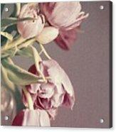Pale Tulips Acrylic Print