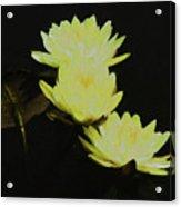Pale Yellow Water Lilies Acrylic Print