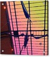 Paleo Flight Acrylic Print