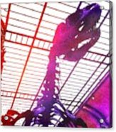 Paleo Rex Acrylic Print