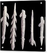 Paleolithic Harpoons Acrylic Print