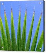 Palm 2 Acrylic Print