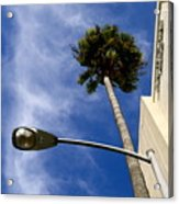 Palm And Streetlight Acrylic Print