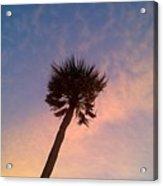Palm At Dusk Acrylic Print