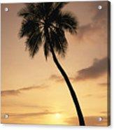 Palm At Sunset Acrylic Print