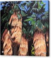 Palm Canyon Entrance Acrylic Print