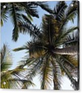 Palm Collection - Standing Tall Acrylic Print