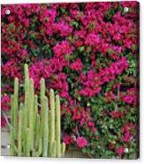 Palm Desert Blooms Acrylic Print