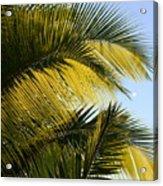 Palm Detail Acrylic Print