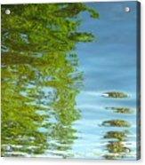 Palm Flect IIi Acrylic Print